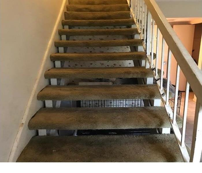 Brown colored carpeted stairway that is saturated with urine, and feces.